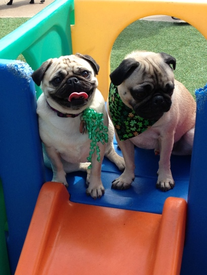 Josie (left) and Bailey (right) hanging out on the slide.