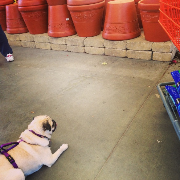 Josie looks on approvingly at Home Depot